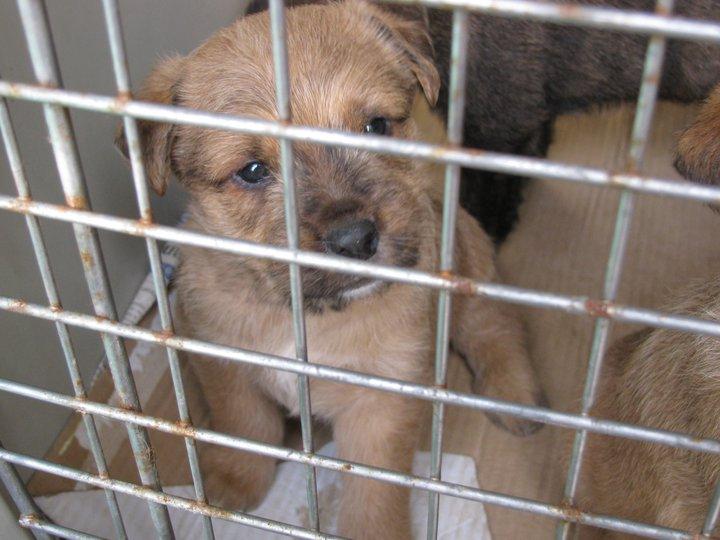 cucciolo_regalo_cuccioli_gratis