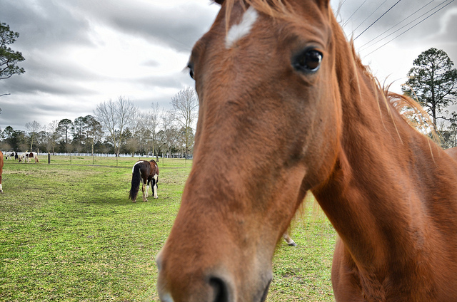 curiosità del cavallo
