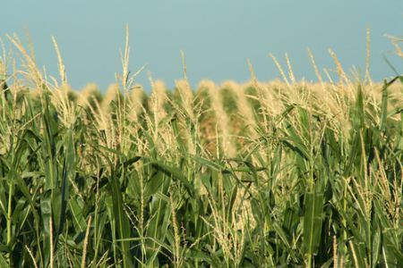 energia eolica fertilizzanti rinnovabili