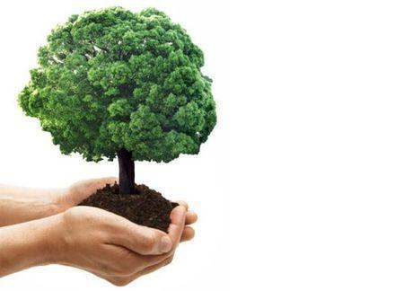 sostenibilità ambientale concorso accade domani