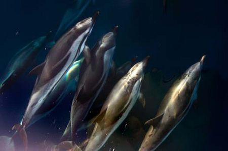 inquinamento mare greenpeace santuario dei cetacei