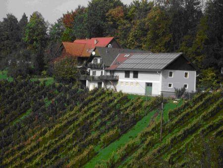 Raffreddare il vino con i pannelli solari