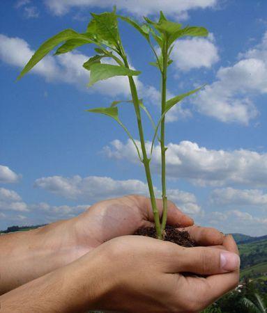 Sviluppo sostenibile, nuovo piano ecologico nel Regno Unito