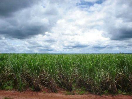 Eco-energie, maxi investimento nel bioetanolo brasiliano