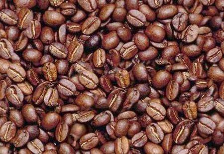 riscaldamento globale insetto che danneggia il caffe