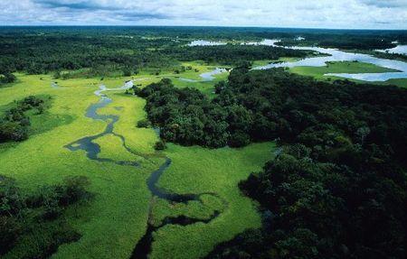 ambiente pericolo deforestazione amazzonia