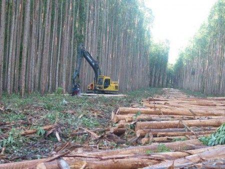 eco energie biomasse spagna ence