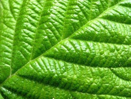 energia solare da foglie artificiali
