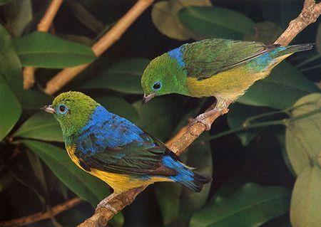 inquinamento luminoso rischio uccelli