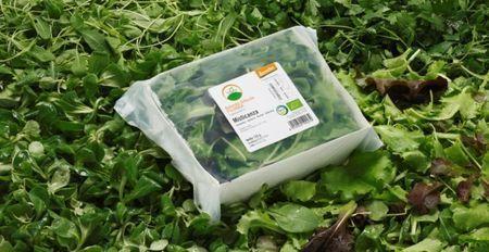 sana 2010 ecovaschetta biodegradabile