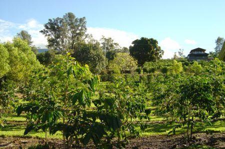 Sviluppo sostenibile, nuovi piani ecocompatibili per Nestlè
