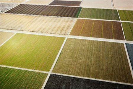 terreni biocarburanti coltivazioni alimentari