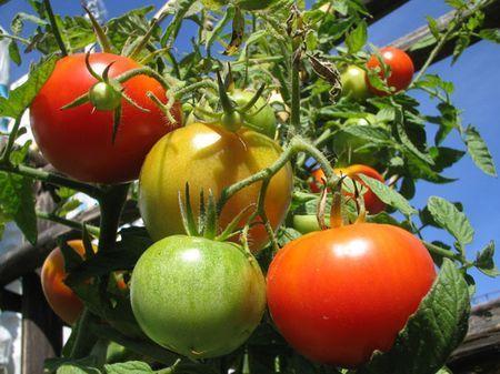 agricoltura biologica orto giardino valle giulia