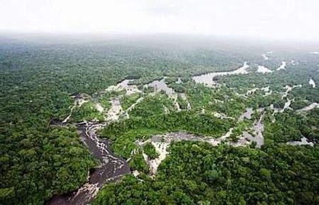 ambiente deforestazione sumatra