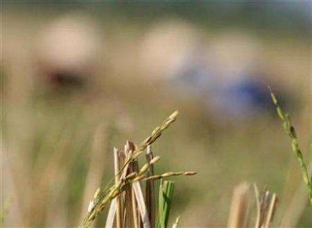 Finanziamenti giapponesi per i biocarburanti filippini