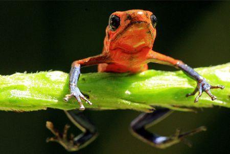 biodiversita deforestazione vertebrati