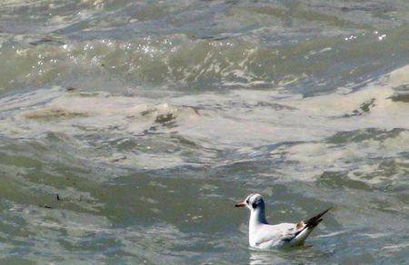 inquinamento mare rischio molluschi