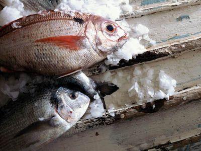 pesci al mercurio