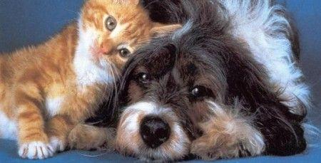 animali cani gatti