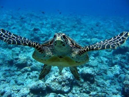 animali tartarughe uccise madagascar