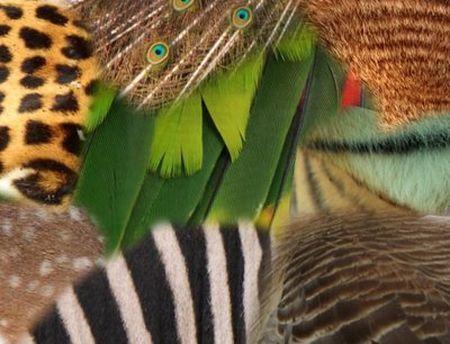 biodiversita specie animali estinzione