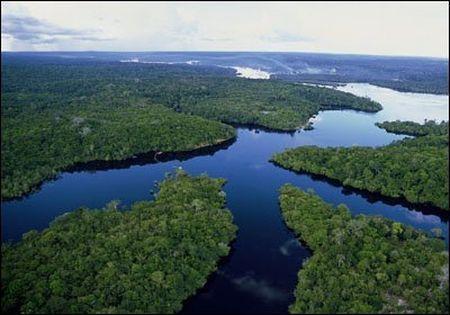 ecosistema biodiversita foresta amazzonica