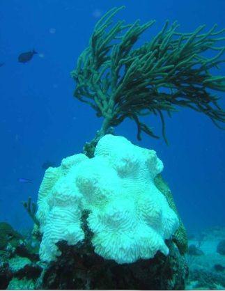 mutamenti climatici coralli bianchi1
