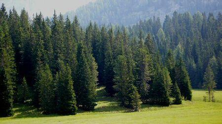 alberi natale 2010 consigli corpo forestale