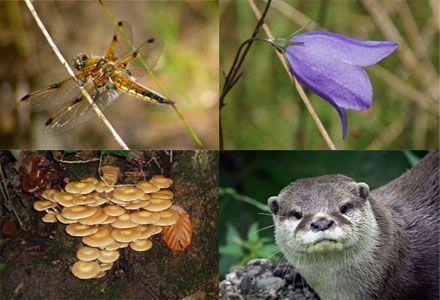 biodiversita' rischio