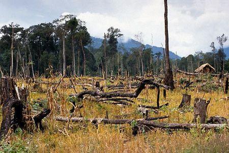 deforestazione perdita patrimonio forestale