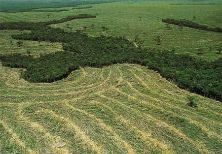 deforestazione riduzione amazzonia