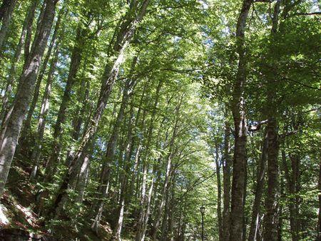 foreste progetto futmon