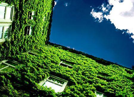 green economy onaee economia sostenibile