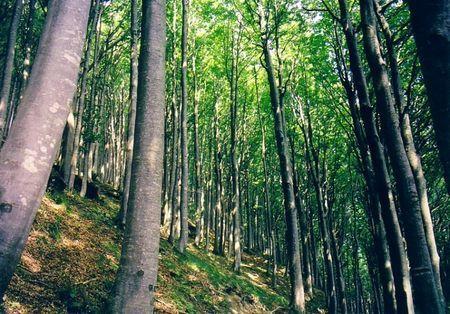 inquinamento ambientale danni boschi italiani