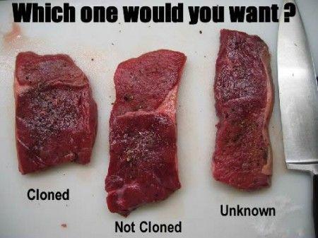 ogm carne clonata
