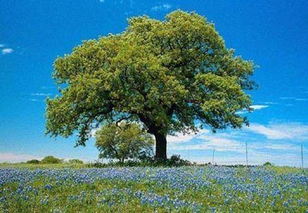 tutela ambientale decalogo albergatori valdostani