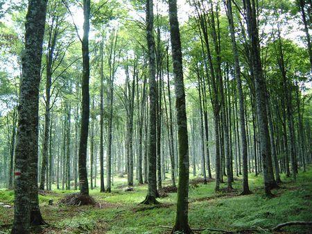 tutela ambientale foreste futuro green