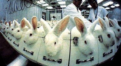 vivisezione animali