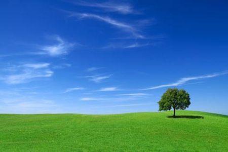 ambiente wwf 2010 anno non ecosostenibile