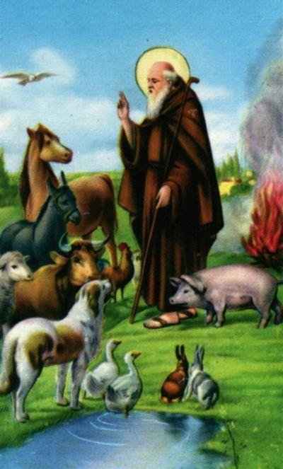 animali benedizione