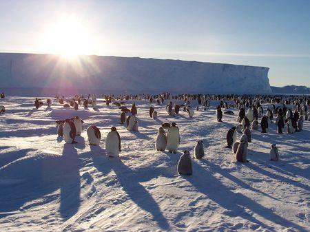 animali pinguini anelli metallici