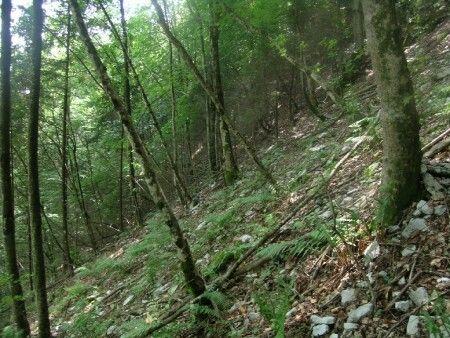 foreste italia patrimonio ambientale