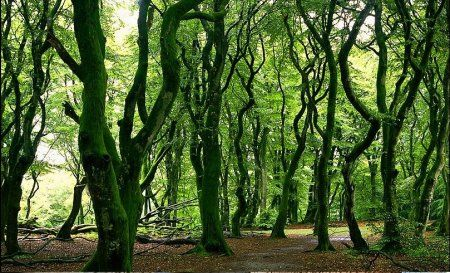 foreste patrimonio ambientale unesco