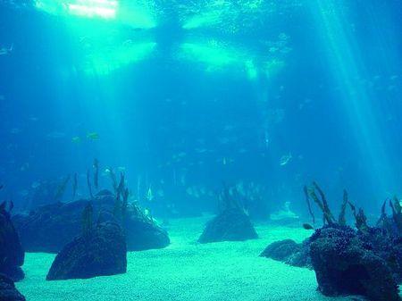 inquinamento mare zone senza ossigeno oceani