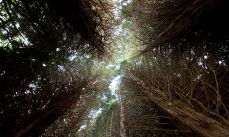 natura foreste
