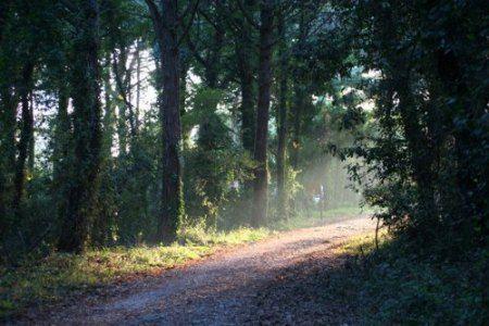 parchi italiani parco circeo equilibri naturali