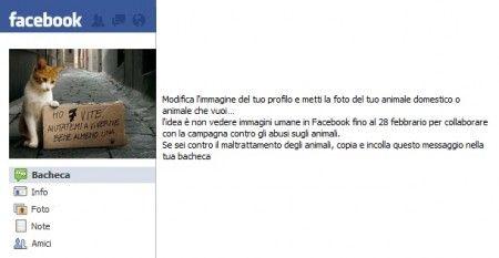 animali profilo facebook