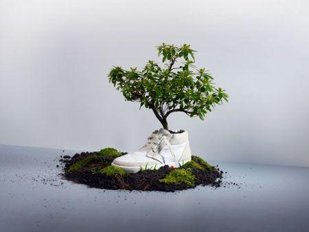 impatto ambientale scarpe biodegradabili piantare