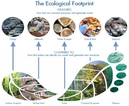 impronta ecologica calcolo test 1