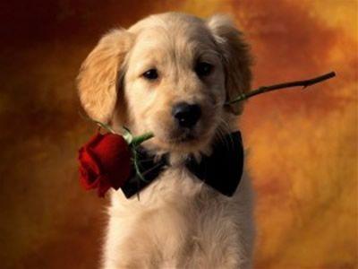 san valentino adozione cane